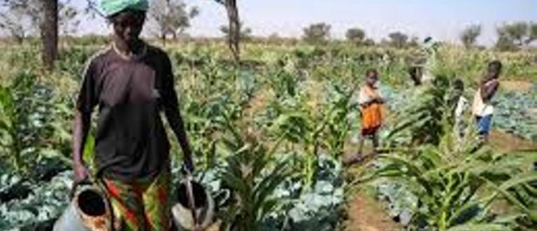 Article : 8 mars : des femmes qui luttent pour la sécurité économique de leurs familles