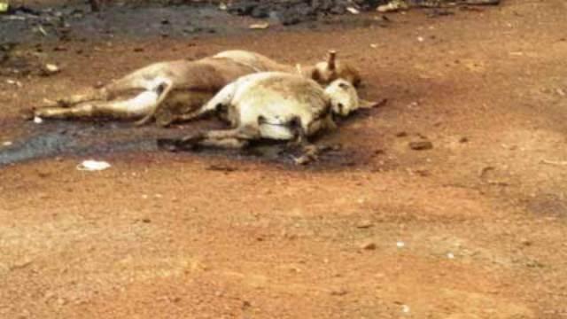 Photo/lefaso.net Des ânes en décomposition rendent l'atmosphère irrespirable dans le quartier qui abrite l'usine d'abattage d'âne